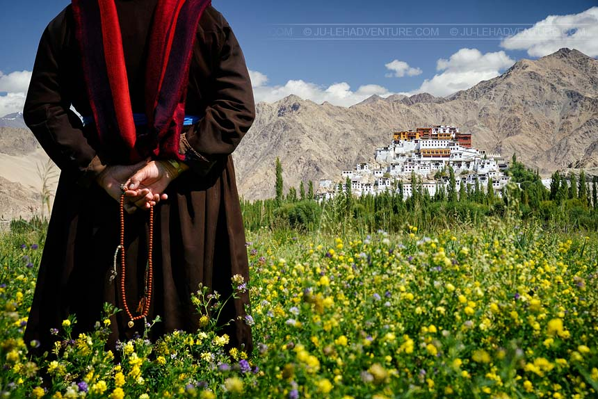 Thiksey Gompa monastery with field of flowers, Ladakh