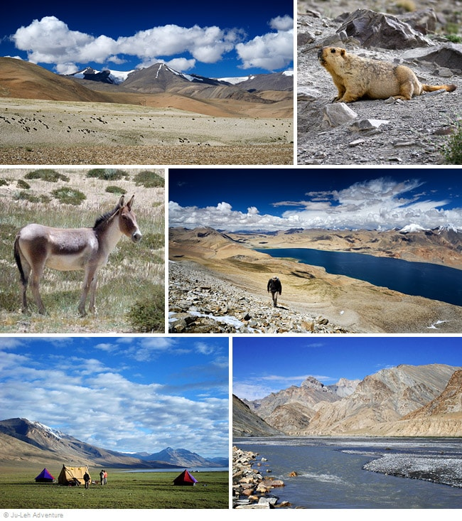 Rumtse to Kibber trek via Tso Moriri lake in Ladakh