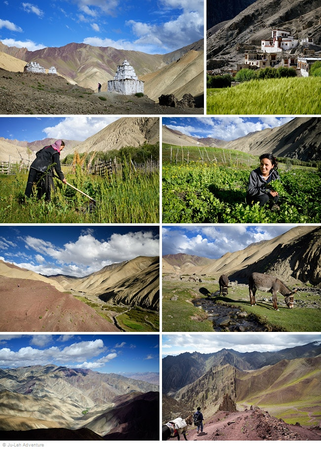 Spituk to Stok trek in Ladakh